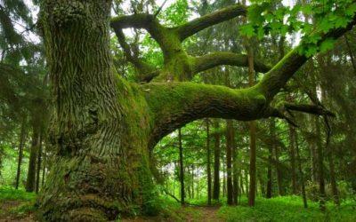 Május 4. Ötödik Hármashatár-hegyi dalostalálkozó a  'Madarak és fák napja' alkalmából
