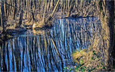 Március 3. Séta Tatán:Fényes források, tavak, nagy platán, ludak