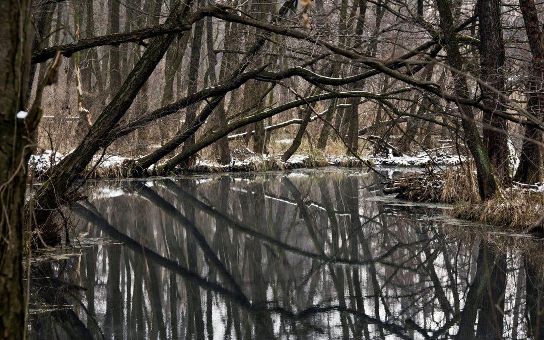2019. december 1. vasárnap Tatai Fényes forrás tanösvény és Vadlúd Sokadalom